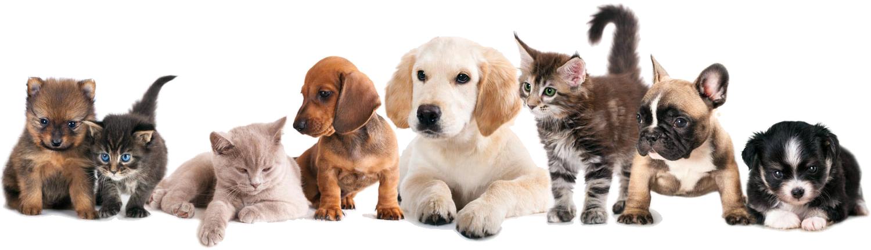 Mr Dog Clinica Veterinário em Jacarei